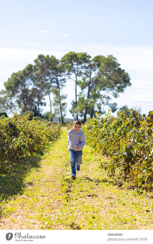 Little boy running throw a vineyard agriculture autumn baby brother care child childhood children colorful country family field food fruit fun garden grape