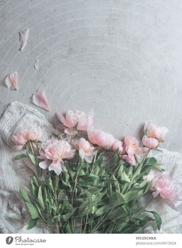Pink pale peonies flowers on white  lace fabric with scattered petals on gray background.  Floral composition. beauty pink floral composition art design fashion