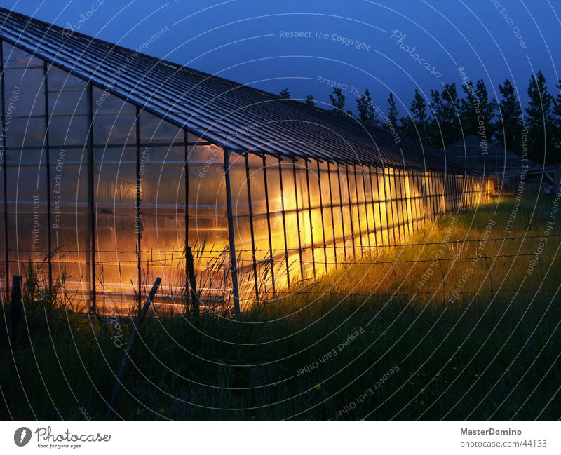 Greenhouse at night Night Agriculture Growth Yellow Twilight Diffuse Architecture Lamp Plant Blue diffuse light