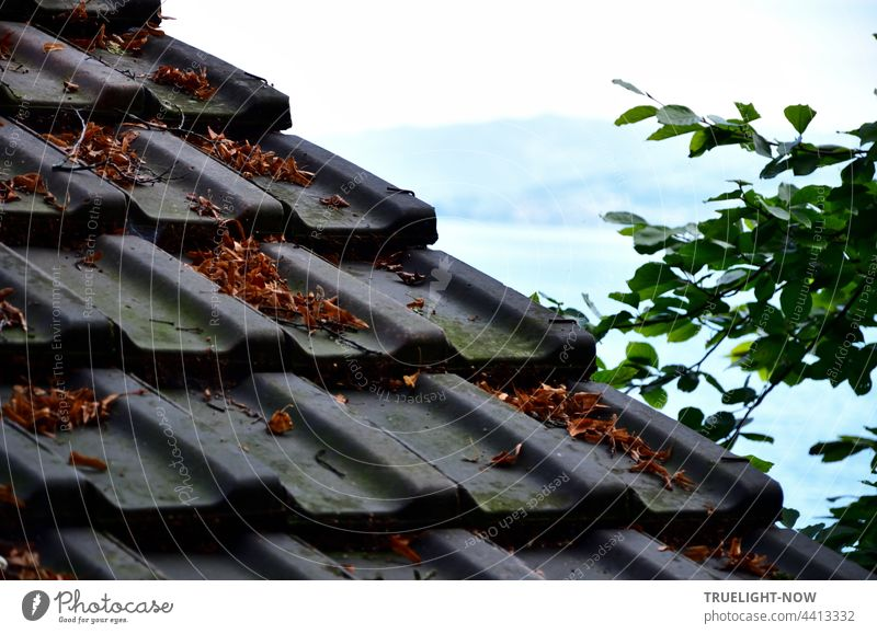 Roof tiles protect an old ship's hut on the wooded shore of Lake Lucerne with a view of the lake and the opposite shore with mountains. Switzerland Ship's hut