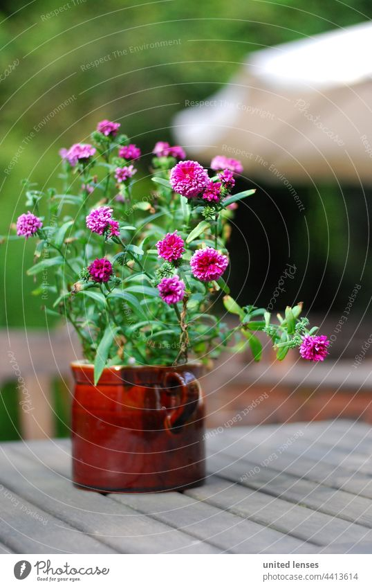 Potted flowers Flowerpot Beer garden idyllic. beauty garden flower