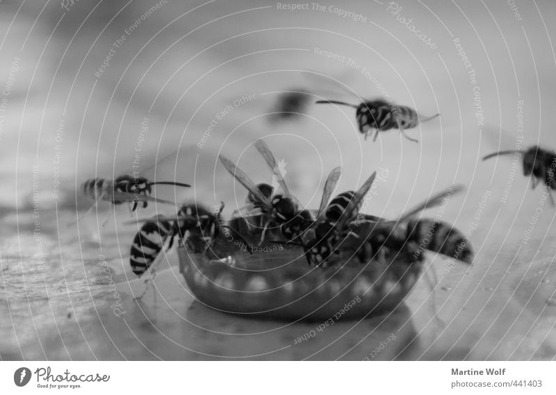 wasp troughs Drinking Nature Animal Bee Wasps Group of animals Flock Crown cork Flying Black & white photo Exterior shot Deserted Shallow depth of field