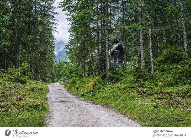 The hiking path to Upper Gosau Lake Dachstein, Austria austria dachstein ramsau countryside landscape scenery forest nature mountain alps europe travel outdoors
