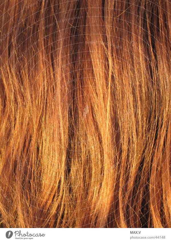 Hair and hairstyles Brown Blonde Glittering Long Long-haired Red-haired Strand of hair Groomed Declaration of love Colour luminosity