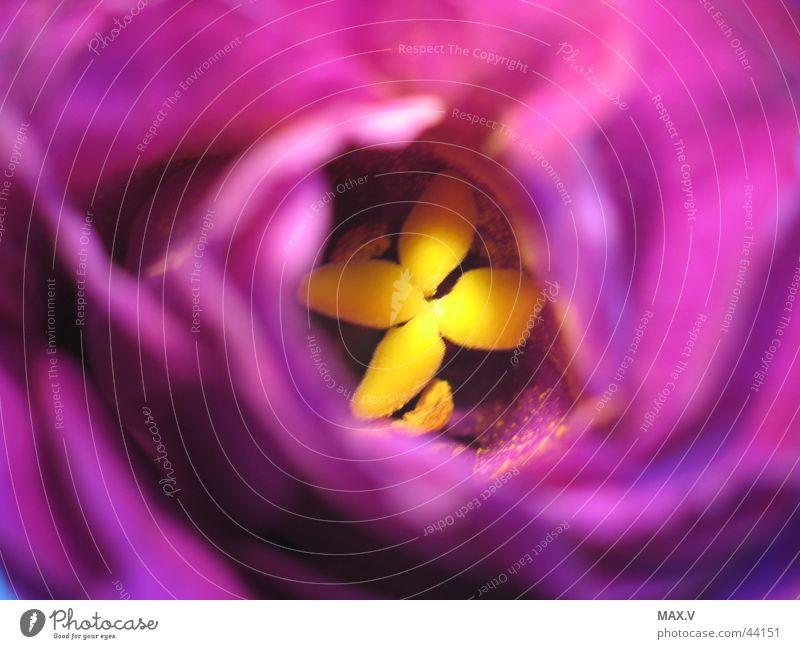 Flower Leaf Yellow Blossom Near Violet Pollen Pistil Blossom leave