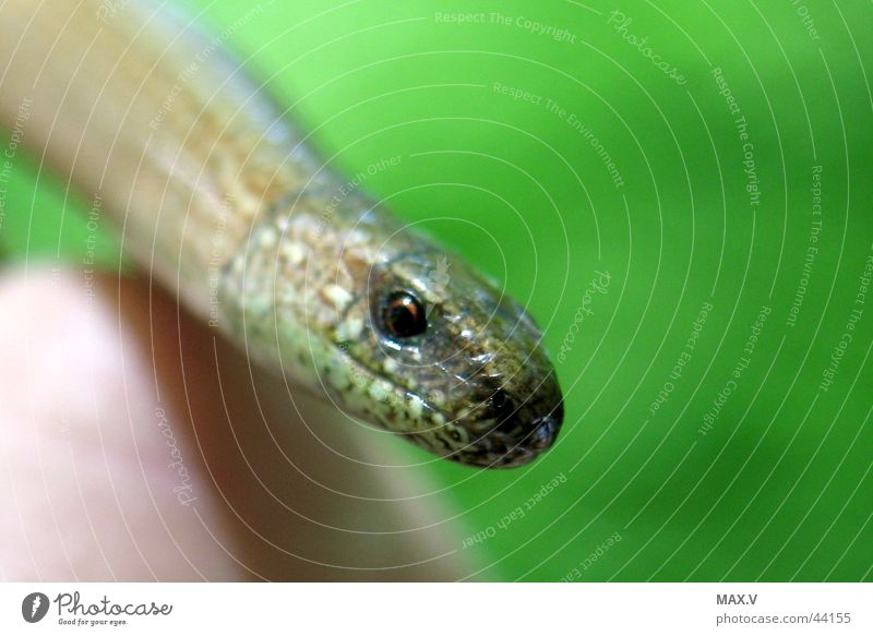 Hand Green Eyes Brown Near Smoothness Barn Slow worm
