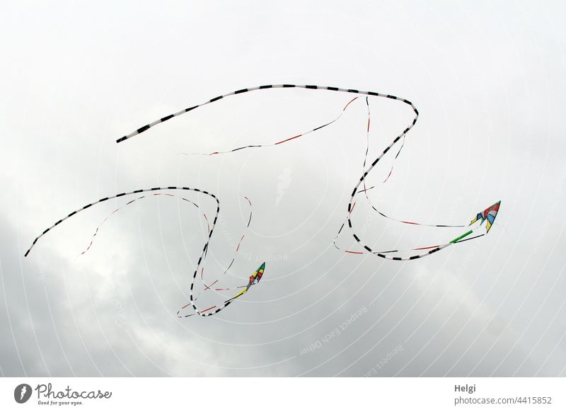Dragon dance - two stunt kites with tails flying in formation in front of cloudy sky Kite Kite festival Flying Sky Clouds tapes Formation Joy fun
