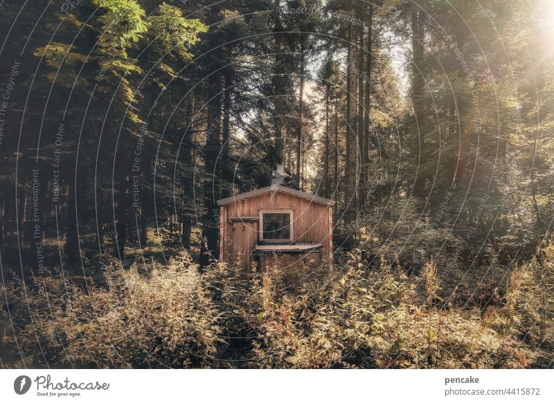 Weekend and sunshine Forest Hut Site trailer Wood trees Sunlight Bushes Relaxation on one's own Loneliness tranquillity covert undergrowth Summer bushes shrubby