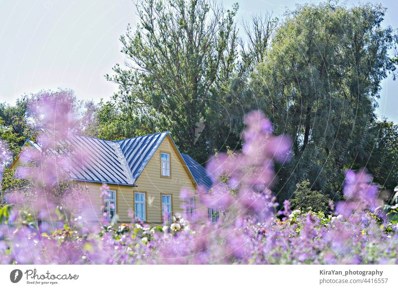 Drowning in flowers summer residence house countryside and blooming purple wildflowers in meadow summertime vacation outdoor rural midsummer yellow building