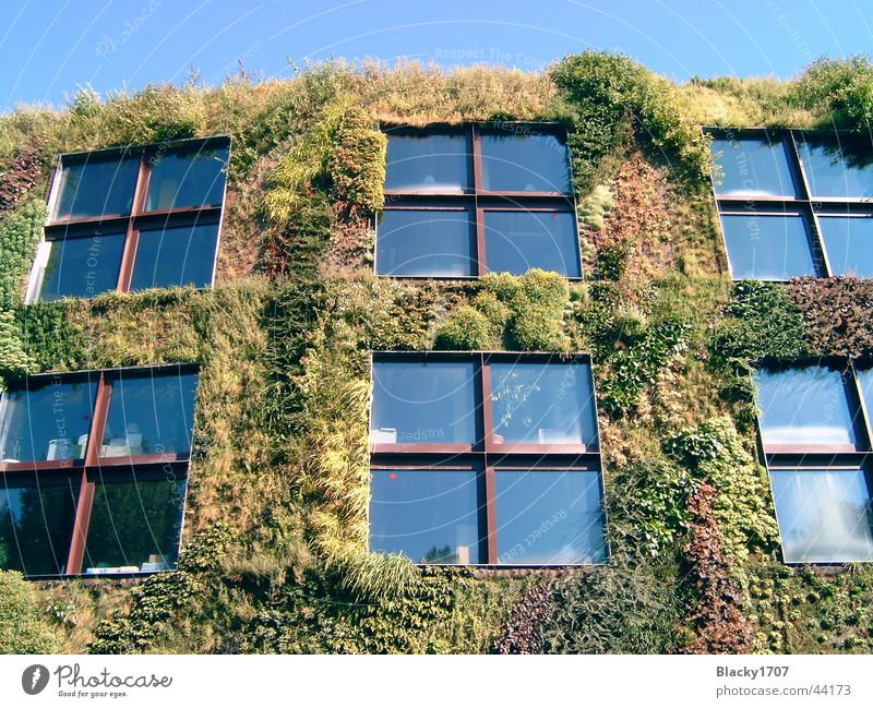 Green House (Residential Structure) Europe Paris Tendril Overgrown