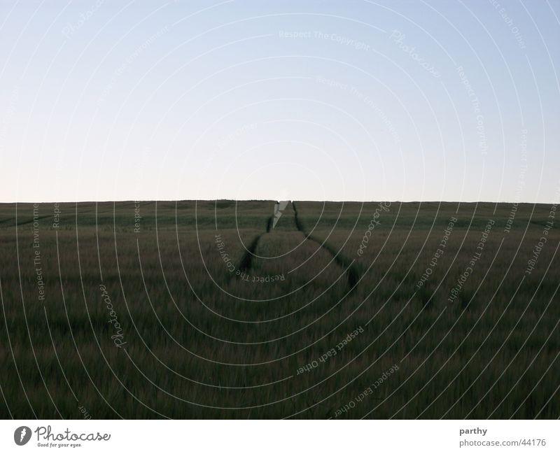 Sky Field Tracks Grain Tractor