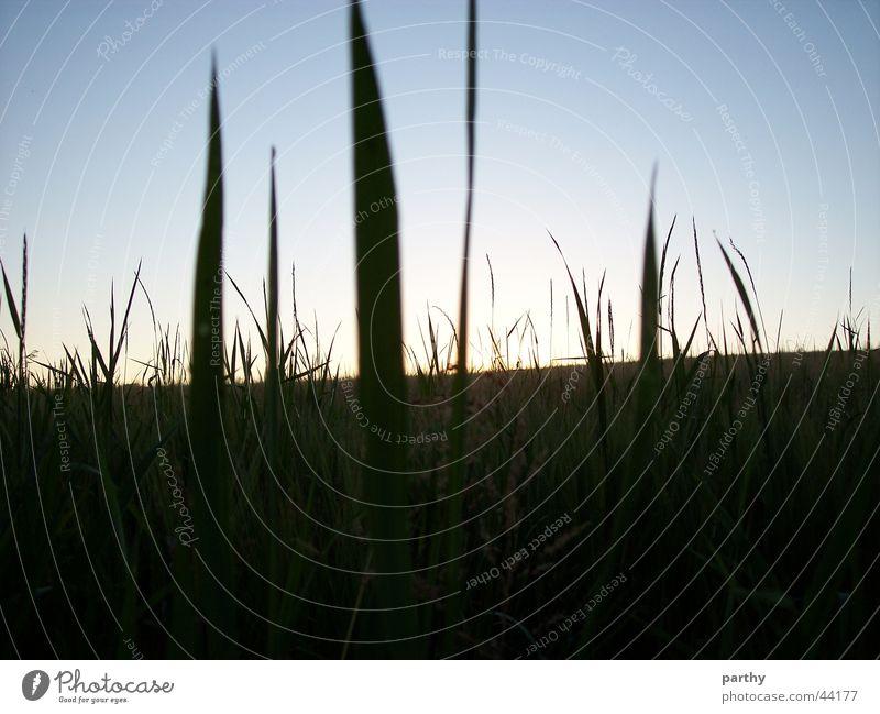 Sky Sun Grass Field Grain
