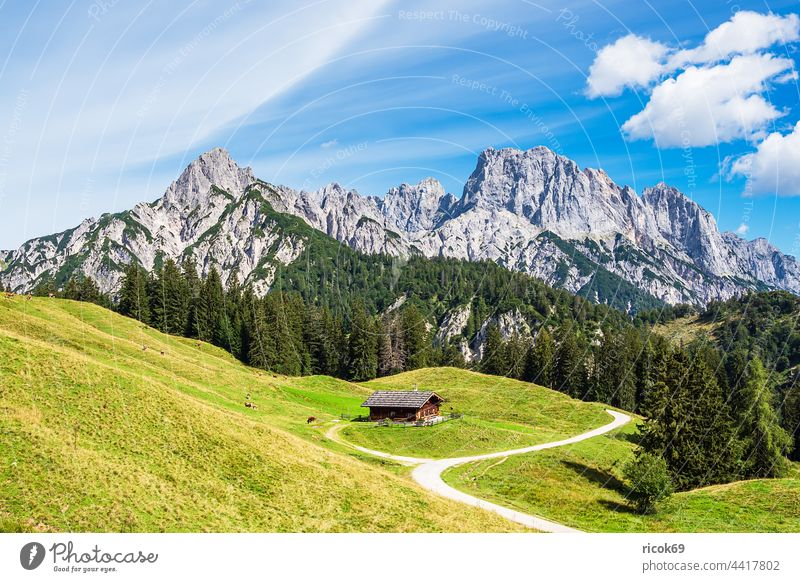 View of the Litzlalm with hut in Austria alpine hut Alps mountain Tree Forest savage emperor Landscape Nature Summer Alpine pasture Meadow Grass Agriculture