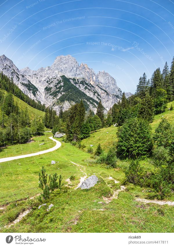 View of the Bindalm in the Berchtesgadener Land in Bavaria Berchtesgaden Country Alps mountain Tree Forest Landscape Nature Summer Alpine pasture Meadow Grass
