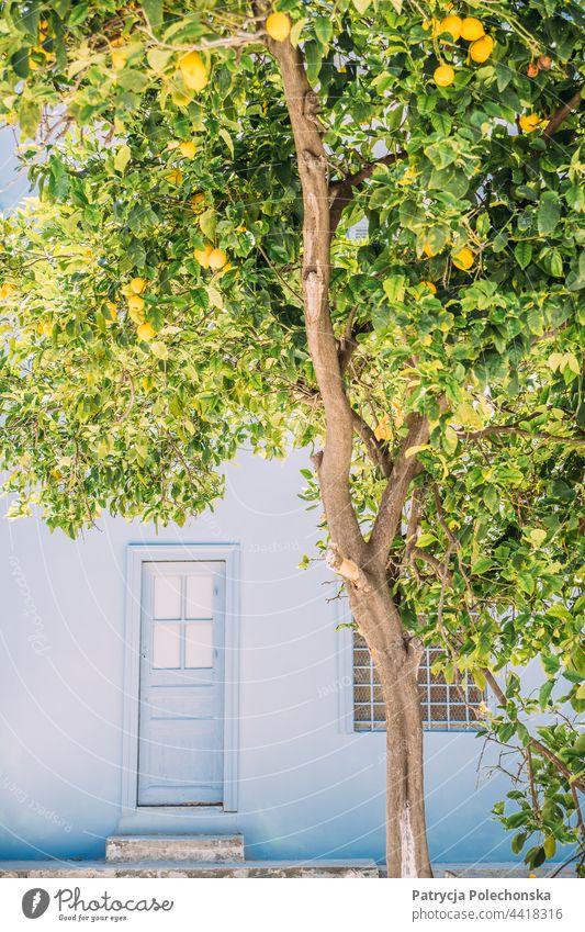 Lemon tree in front of a blue house Tree Lemons Blue Architecture Greece Greek Door Summer