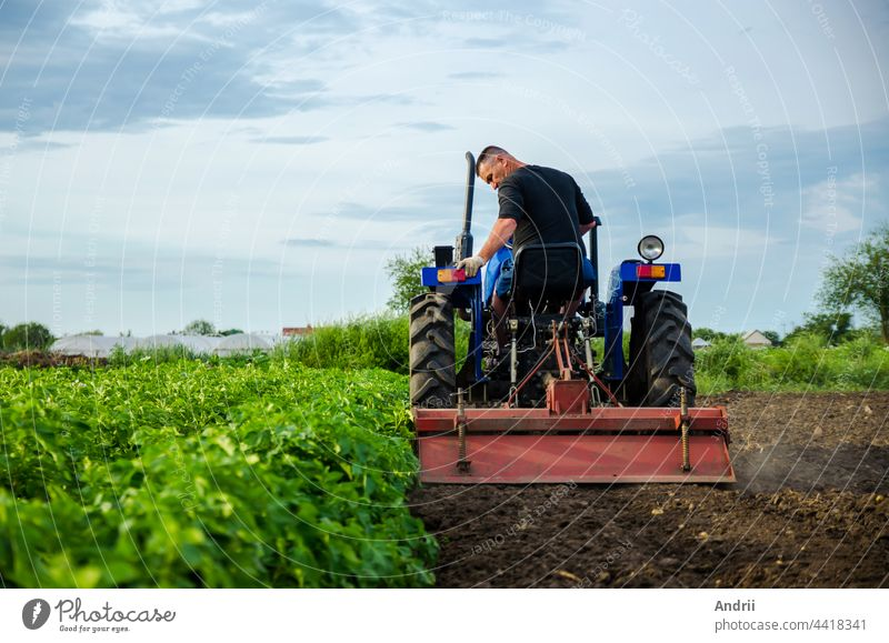 A farmer on a tractor removes the tops after harvesting. Development of agricultural economy. Farming, agriculture. Loosening surface, land cultivation. Plowing. Preparing farm land for a new planting