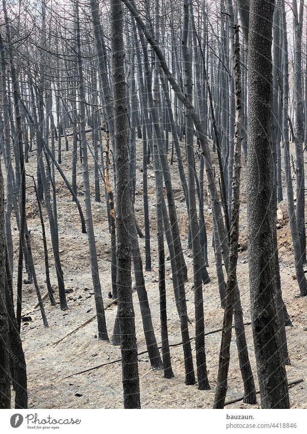 FIREWORLD. Forest fire Woodground Blaze Tree Fire Nature Exterior shot Smoke Deserted Environment Colour photo Dangerous Burn Threat Summer Burnt Landscape