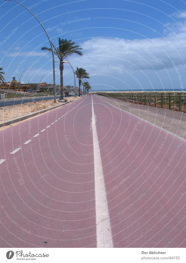Are we almost there? Beach Promenade Sea promenade Palm tree Asphalt Green Clouds Esquinzo Vacation & Travel Fuerteventura Cycle path Europe Street Sand Plant