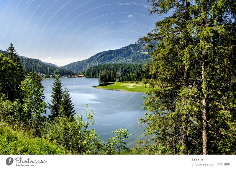 Spitzingsee Nature Landscape Cloudless sky Summer Beautiful weather Tree Bushes Alps Mountain Lakeside Esthetic Far-off places Natural Blue Green Calm