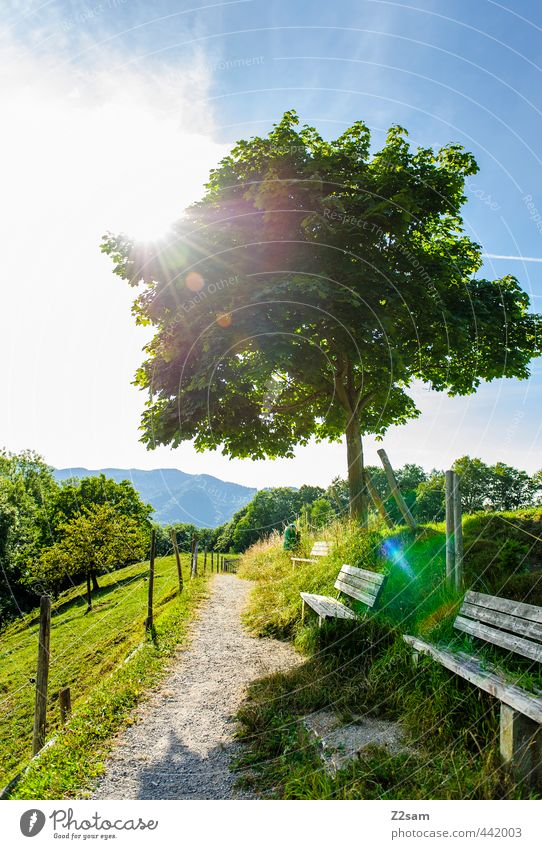 Nature Vacation & Travel Summer Sun Tree Relaxation Loneliness Calm Landscape Environment Mountain Meadow Lanes & trails Freedom Horizon Moody