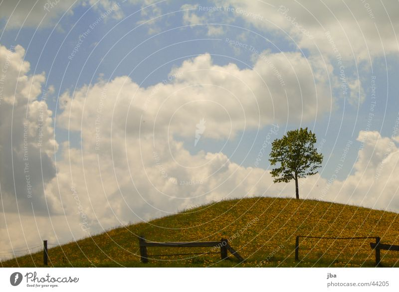 Tree in field on hill Clouds Fence Sow thistle flowers Emmental Sumiswald Switzerland Mountain Sky Canton Bern