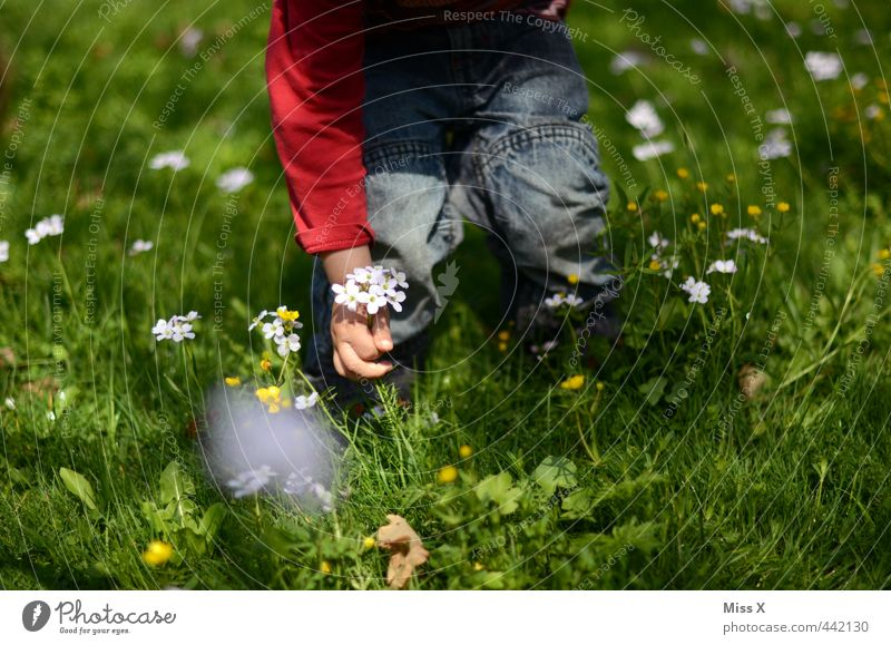 Human being Child Summer Flower Love Meadow Emotions Grass Spring Blossom Moody Infancy Cute Gift Romance Infatuation