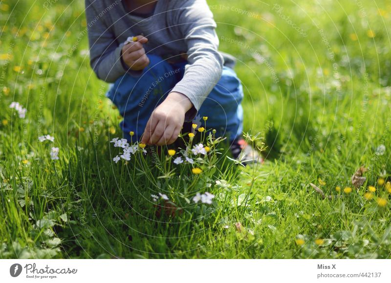 Human being Child Summer Flower Love Meadow Emotions Spring Blossom Moody Leisure and hobbies Infancy Cute Gift Romance Infatuation
