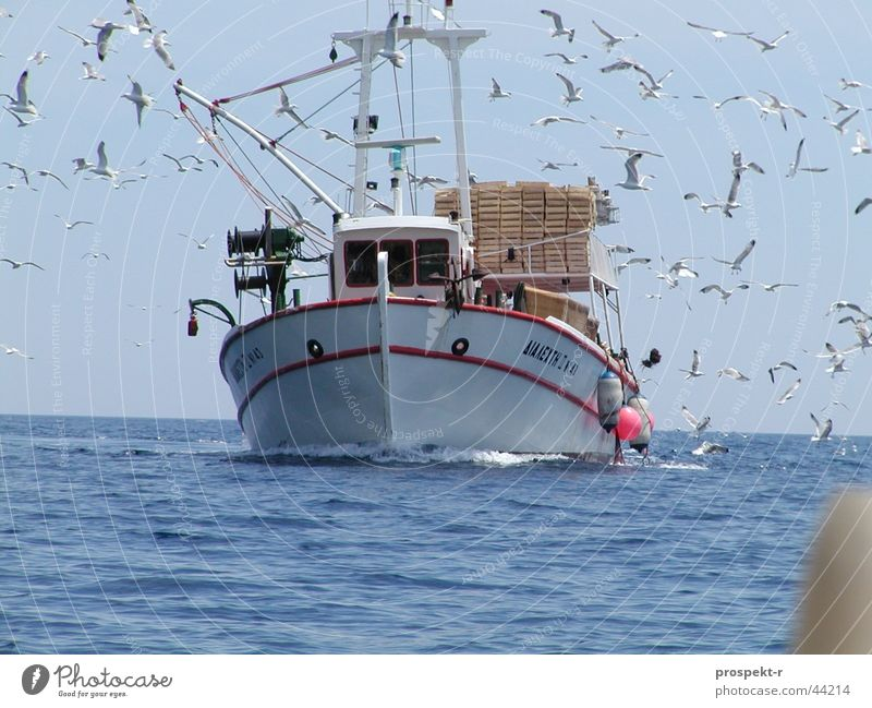 The swarm of seagulls Fishing boat Bird Seagull Direct Collision Waves Ocean Work and employment Navigation Water Fishing (Angle) Blue Sky Sun