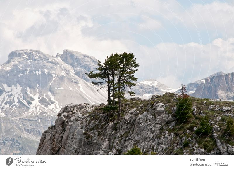 Group cuddling on the rock Environment Nature Landscape Clouds Climate Beautiful weather Plant Tree Hill Rock Alps Mountain Peak Snowcapped peak Glacier
