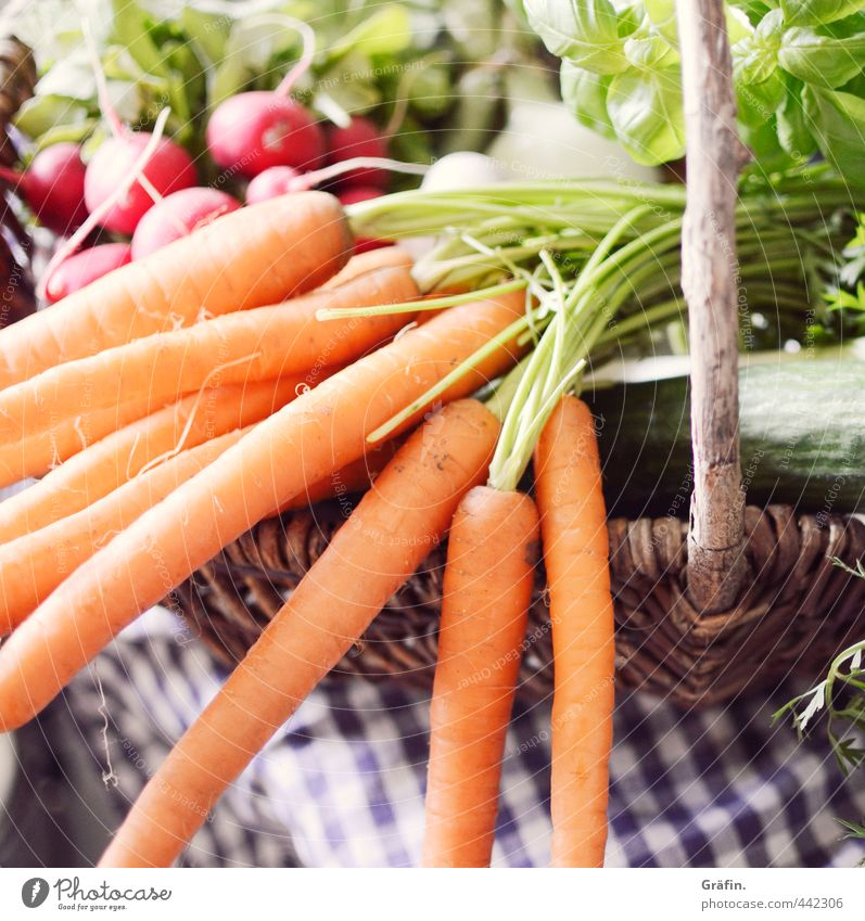 Nature Green Environment Natural Healthy Food Orange Energy To enjoy Shopping Fitness Wellness Appetite Vegetable Delicious Lettuce
