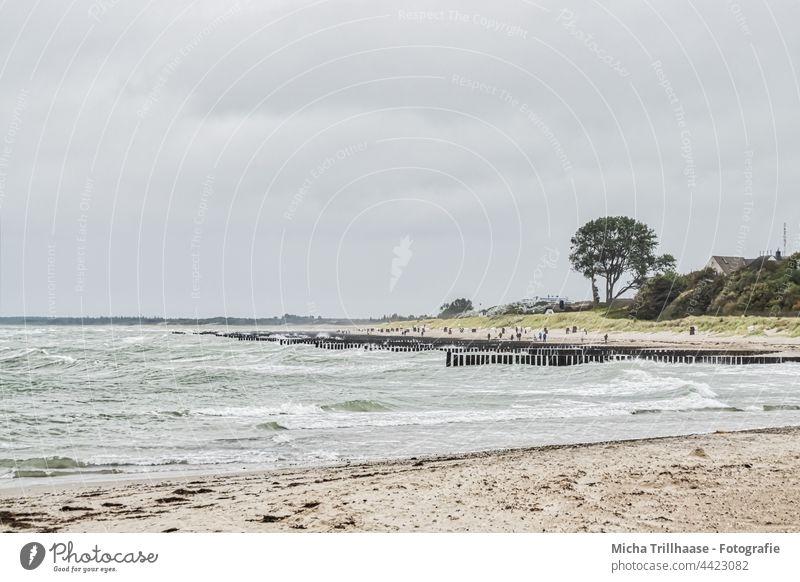 Baltic Sea beach with wind and waves Darss Fischland-Darss-Zingst Ahrenshoop steep coast Beach Waves Water groynes Ocean Sand trees Forest Sky Clouds Wind Sun