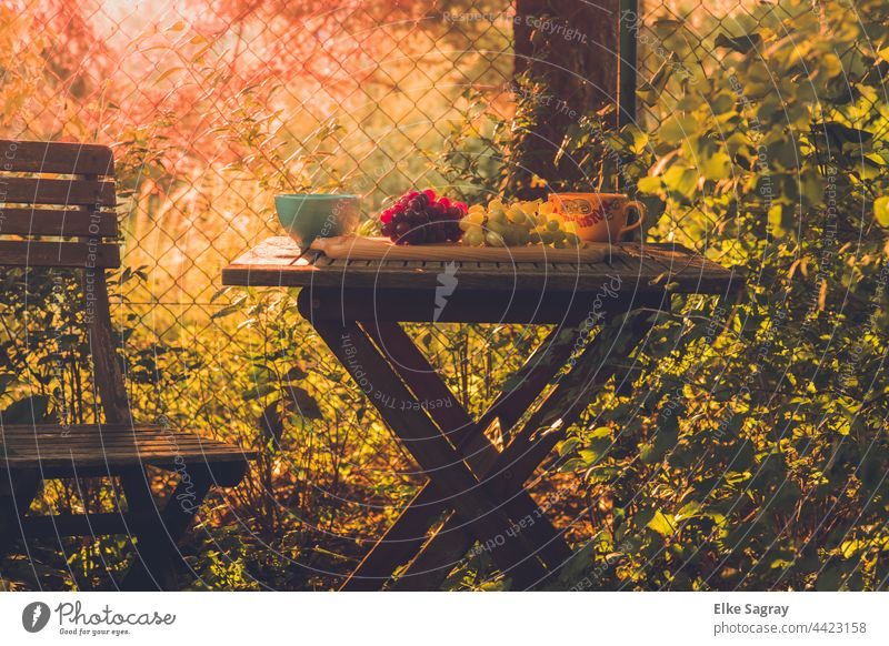 A place to dream.... #garden Sunlight Exterior shot Colour photo Nature Light Shadow Deserted Day Tree Shallow depth of field