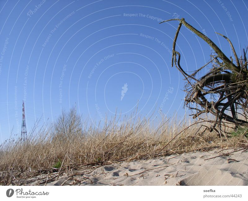 Elbe beach Beach Bushes Sky Blue Sand