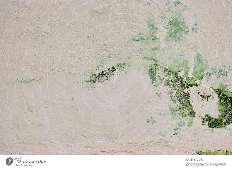 an old house wall with graceful algae drawing Algae green algae Wall (building) Plaster roughcast Delicate daintily Drawing Wall (barrier) Facade Old crumble