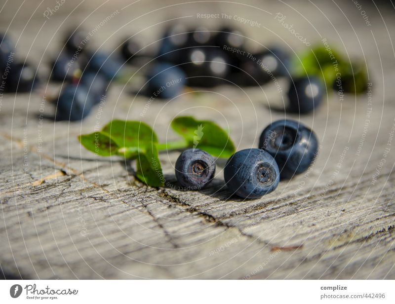 Blue Bear Food Fruit Nutrition Picnic Vegetarian diet Health care Fitness Well-being Summer Agricultural crop Discover Wild Blueberry Wooden board Accumulate