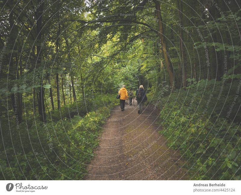 A hiking group in an old mixed forest on a rainy day adult recreation health together outdoors people walk activity hike active nature trip summer young women