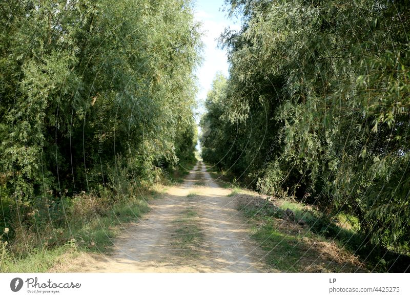 Footpath through the wood believe pray Prayer Hope Spirituality Belief Peace tranquillity Exceptional Wanderlust Beginning Holy Christ Jesus house of God Calm