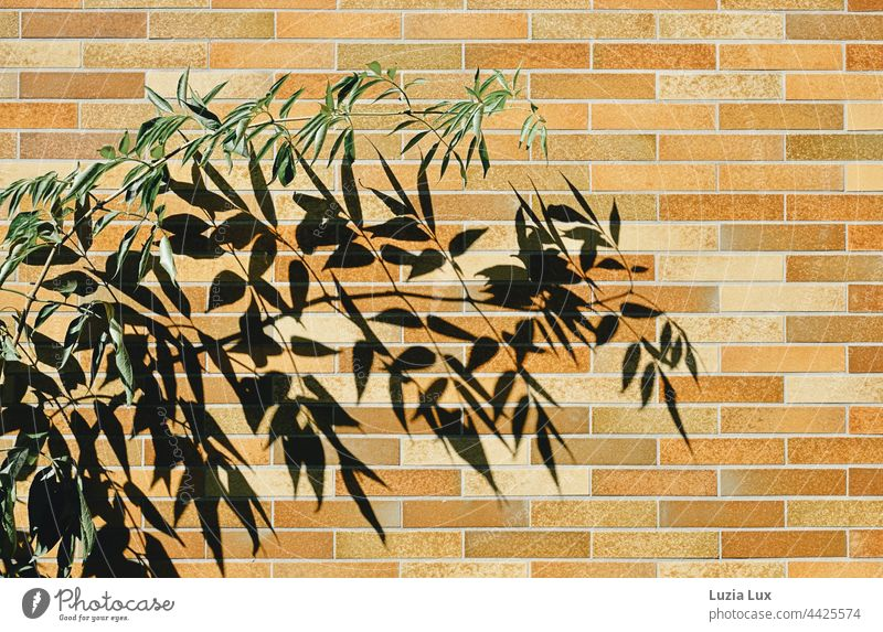 Branch with green foliage, behind it its much larger shadow on a brown and orange outer wall Green Twig leaves Shadow Sun sunny Bright Shadow play Nature Light