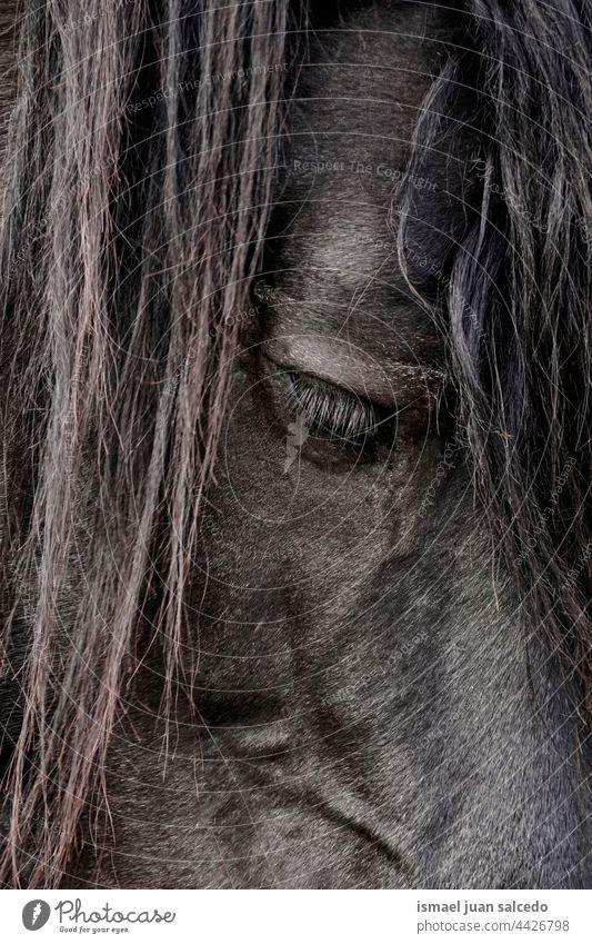 black horse portrait, horse eye animal wild head eyes ears hair nature cute beauty elegant wild life wildlife rural meadow farm grazing pasture outdoors field