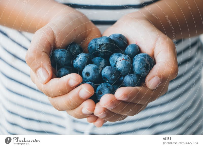 Handful of blueberries in little girl hands blueberry child holding handful ripe raw fruit healthy snack dessert delicious stripes tasty food summer close up