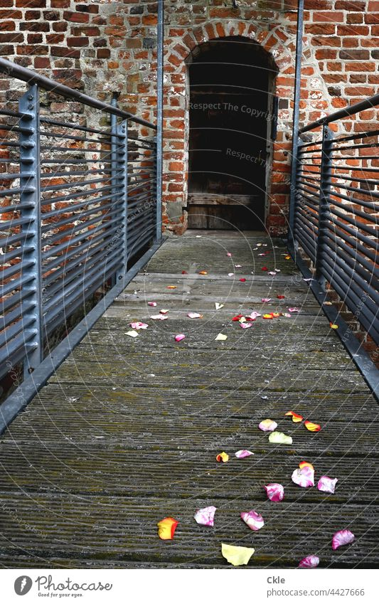 Flowery way to closed door blossoms masonry Tower Corridor Wedding celebration Remains Memory Medieval times Wall (barrier) Wall (building) Old