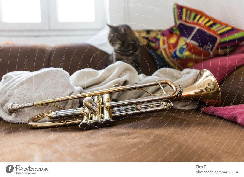 a trumpet and in the background a tomcat Trumpet Cat Music Musical instrument Colour photo Interior shot Deserted Brass instrument Detail at home couch Sofa