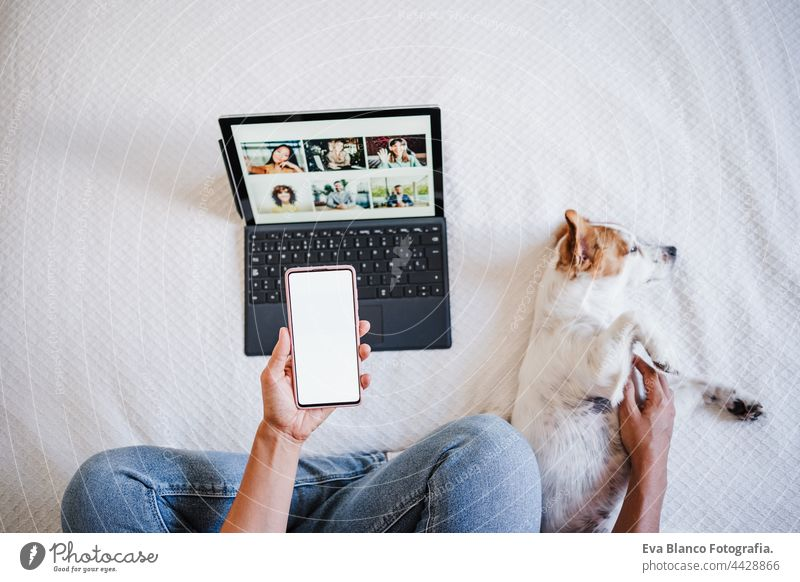 woman on video call with friends on laptop. cute small jack russell dog lying besides. using mobile mobile. technology and home office unrecognizable computer