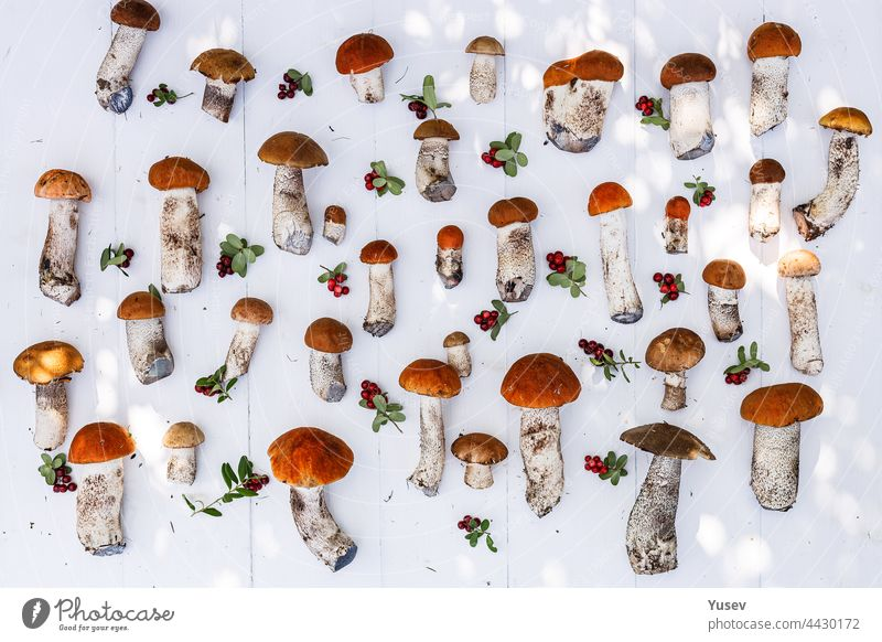 Autumn background. Orange cap boletus mushrooms and ripe lingonberry on a white wooden background. Picking wild mushrooms in the forest pattern. Autumn harvest of edible forest mushrooms and berries