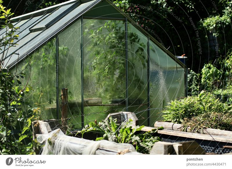 a greenhouse full of green plants. Vegetable gardening, allotment gardener Greenhouse Garden allotment holder Herbaceous plants extension Garden plot Glass