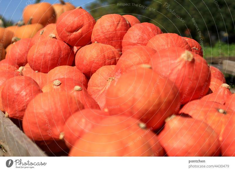 many pumpkins are ready for sale. hokkaido Pumpkin Hokkaido Orange Stack Agriculture Domestic farming Harvest Autumn Many quantity Healthy Eating organic