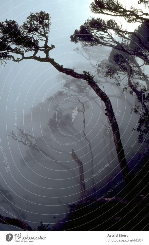 Tree Forest Mountain Gray Fog Creepy Virgin forest Eerie Sri Lanka