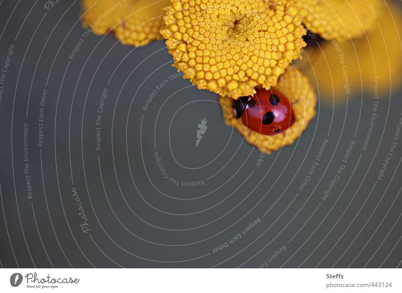 HAPPY BIRTHDAY PHOTOCASE Valentine's Day Nature Plant Animal Summer Flower Beetle Ladybird Crawl Happy Natural Beautiful Yellow Joie de vivre (Vitality) Desire