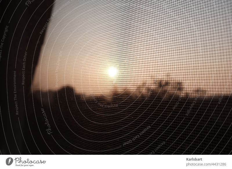 Fly screen in the sunset Plague of mosquitos Mosquito repellent Mosquitos Crane fly Foresight Summer Colour photo Nature Detail Environment Insect Deserted