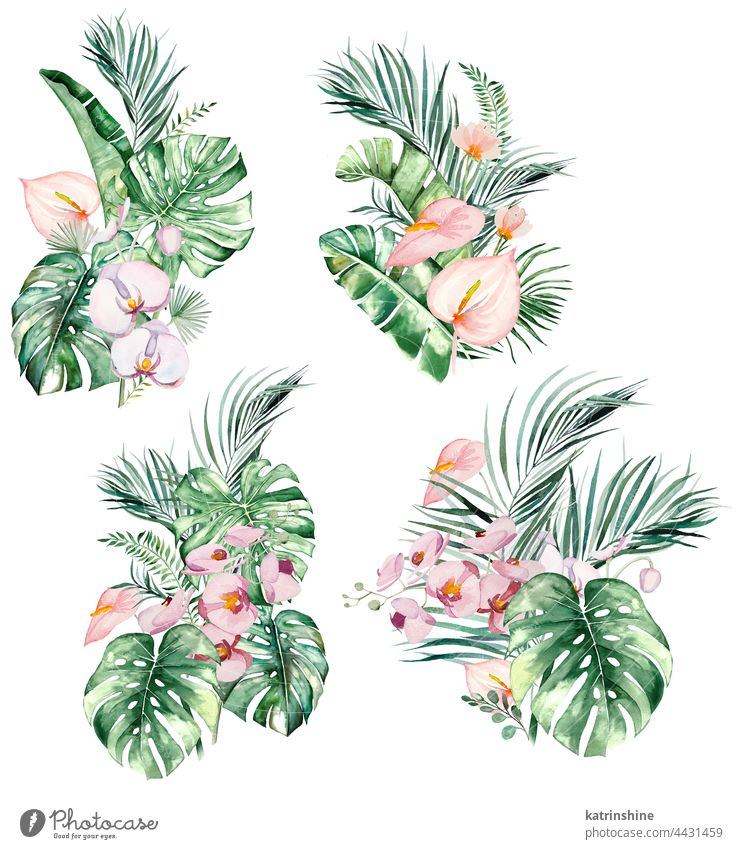 Watercolor pink tropical leaves and flowers bouquets isolated illustration Drawing Element Exotic Hand drawn Isolated Ornament Painted Set Sketch acuqerelle